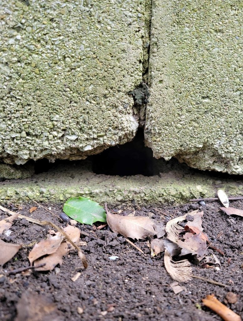 Fix the hole in the foundation of the house